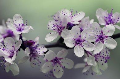 Collyfer flor blanca y morada